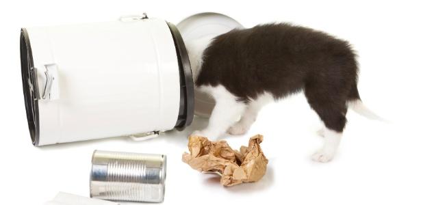 Cães e gatos longe de perigos: veja como evitar acidentes dentro de casa