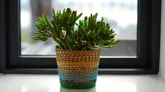 Além de deixarem o ambiente de qualquer casa mais alegre, as plantas são ideias para filtrar o ar do local. Conheça cinco exemplos de plantas que ajudam o ambiente em casa