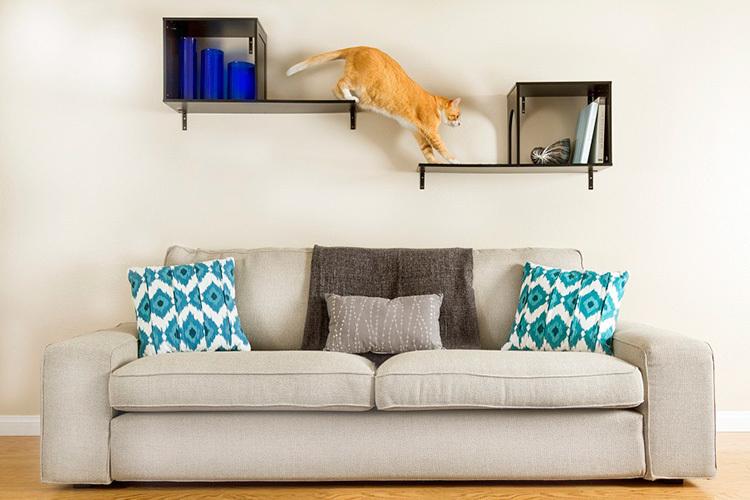 Confira dicas de como criar animais de estimação em apartamentos