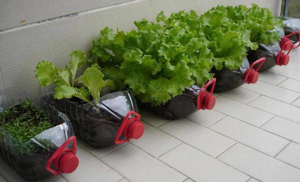 Plantar em casa: aprenda a ter uma horta doméstica