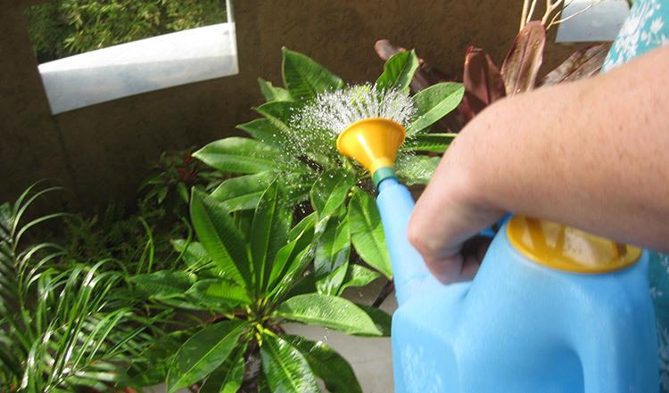 Água reaproveitada para regar plantas